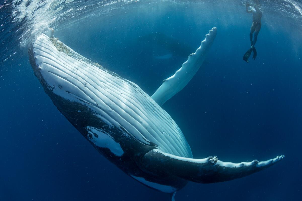 интересное фото с китами