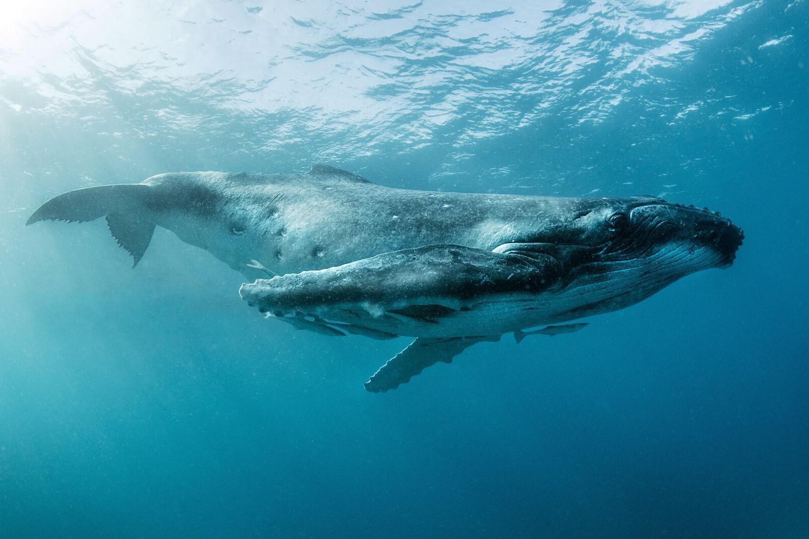 океанариум, интересное фото с китами считается дробь картечь
